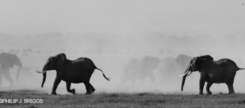 Conflict and politics in Amboseli